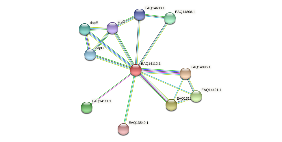 RB2654_15621 protein (Maritimibacter alkaliphilus) - STRING interaction network