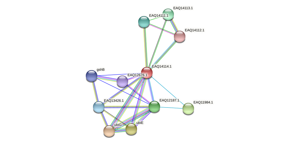 RB2654_15631 protein (Maritimibacter alkaliphilus) - STRING interaction network