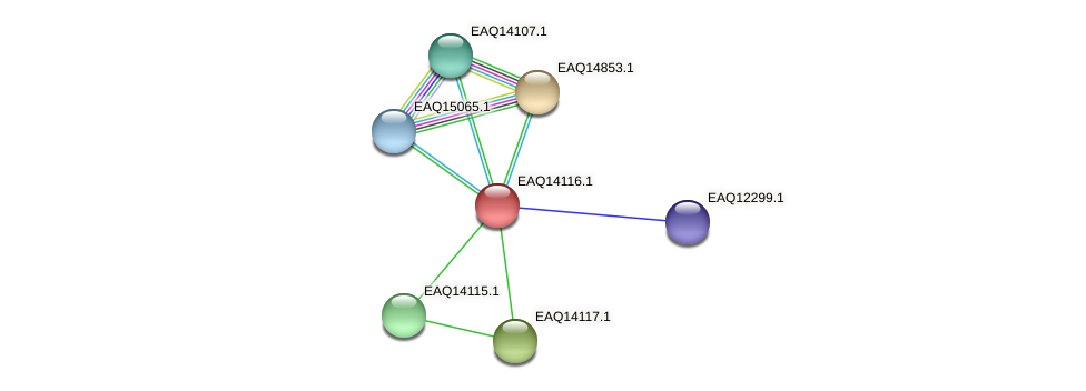 RB2654_15641 protein (Maritimibacter alkaliphilus) - STRING interaction network
