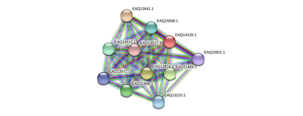 RB2654_15661 protein (Maritimibacter alkaliphilus) - STRING interaction network