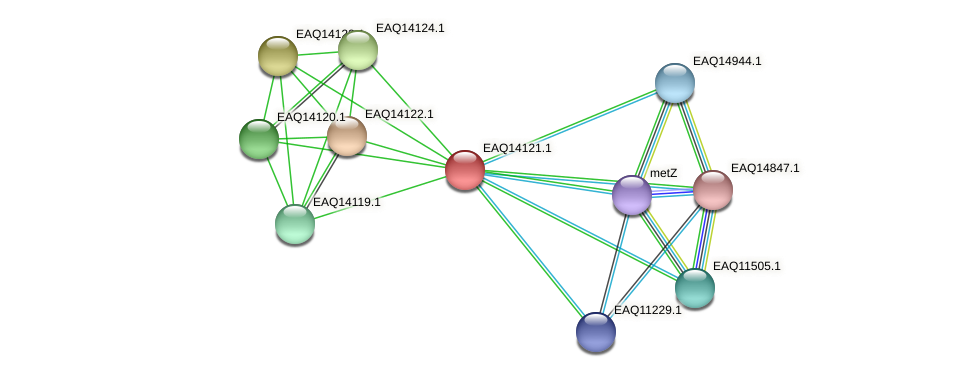RB2654_15666 protein (Maritimibacter alkaliphilus) - STRING interaction network