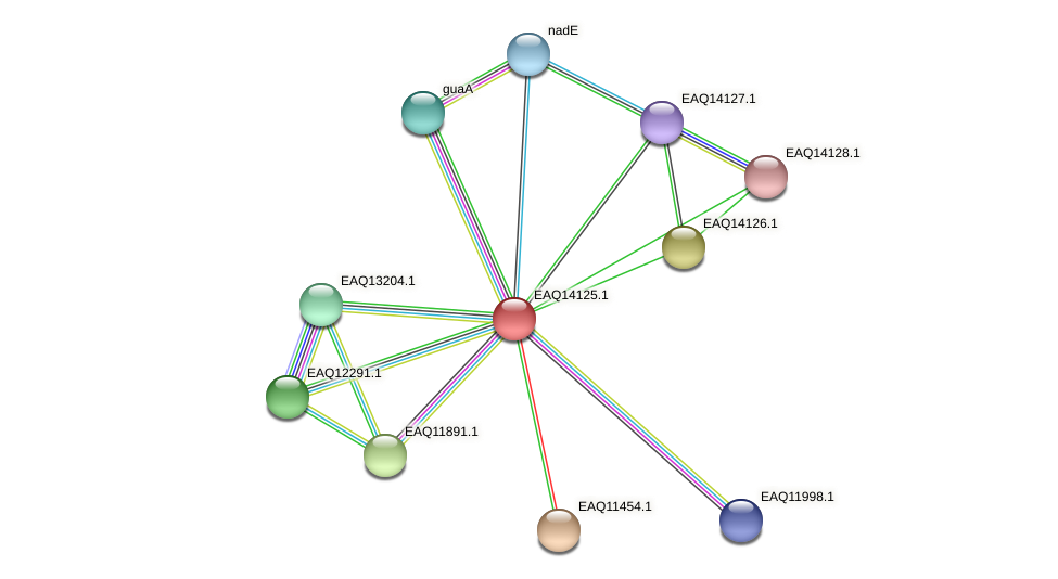 RB2654_15686 protein (Maritimibacter alkaliphilus) - STRING interaction network