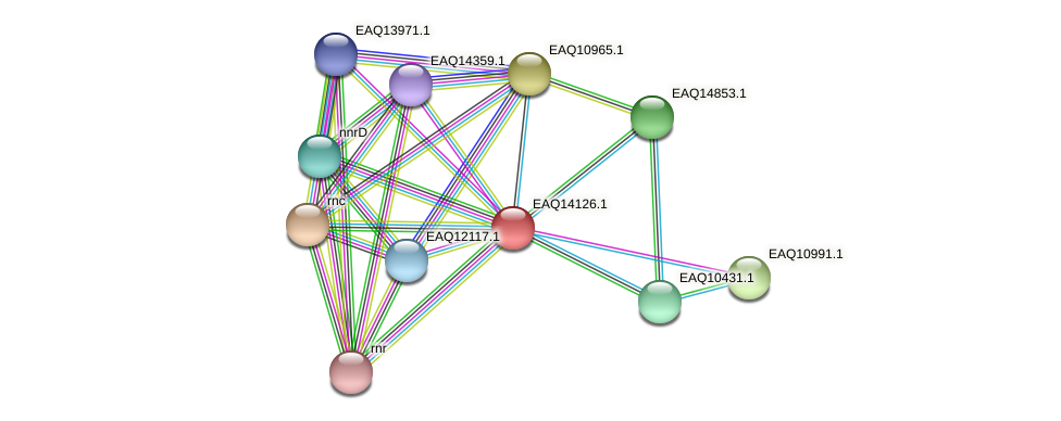 RB2654_15691 protein (Maritimibacter alkaliphilus) - STRING interaction network