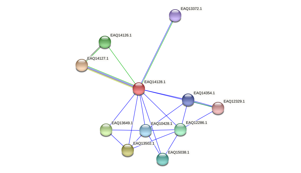 RB2654_15701 protein (Maritimibacter alkaliphilus) - STRING interaction network