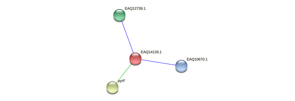RB2654_15706 protein (Maritimibacter alkaliphilus) - STRING interaction network