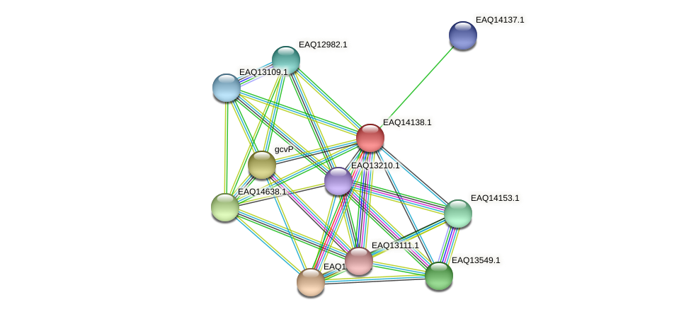 RB2654_15751 protein (Maritimibacter alkaliphilus) - STRING interaction network