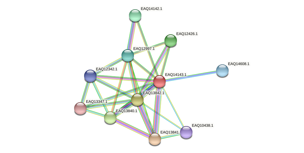 RB2654_15776 protein (Maritimibacter alkaliphilus) - STRING interaction network