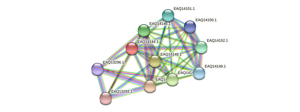 RB2654_15781 protein (Maritimibacter alkaliphilus) - STRING interaction network