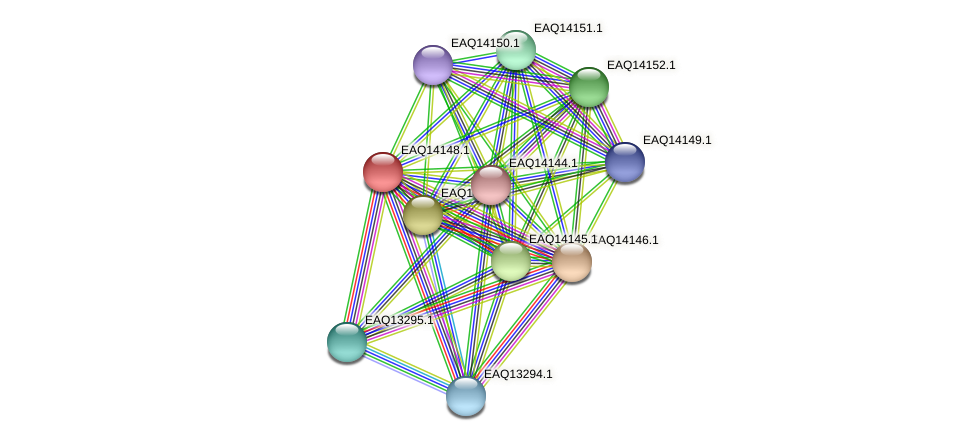 RB2654_15801 protein (Maritimibacter alkaliphilus) - STRING interaction network