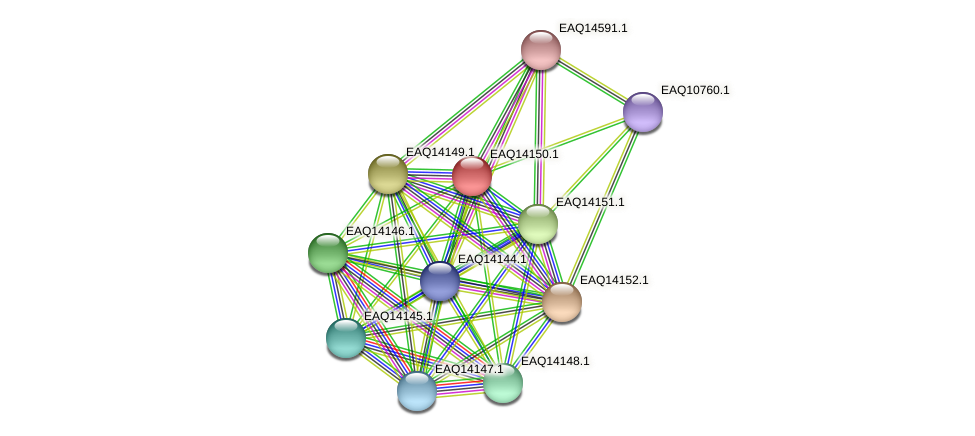 RB2654_15811 protein (Maritimibacter alkaliphilus) - STRING interaction network