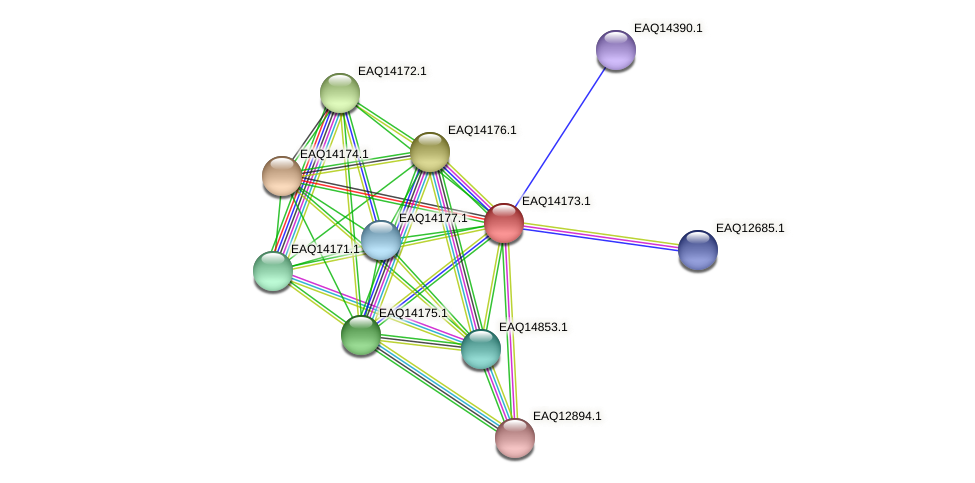 RB2654_15926 protein (Maritimibacter alkaliphilus) - STRING interaction network
