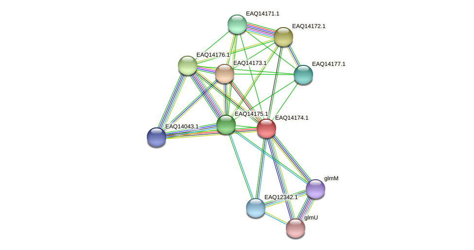 RB2654_15931 protein (Maritimibacter alkaliphilus) - STRING interaction network