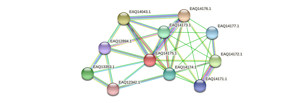 RB2654_15936 protein (Maritimibacter alkaliphilus) - STRING interaction network