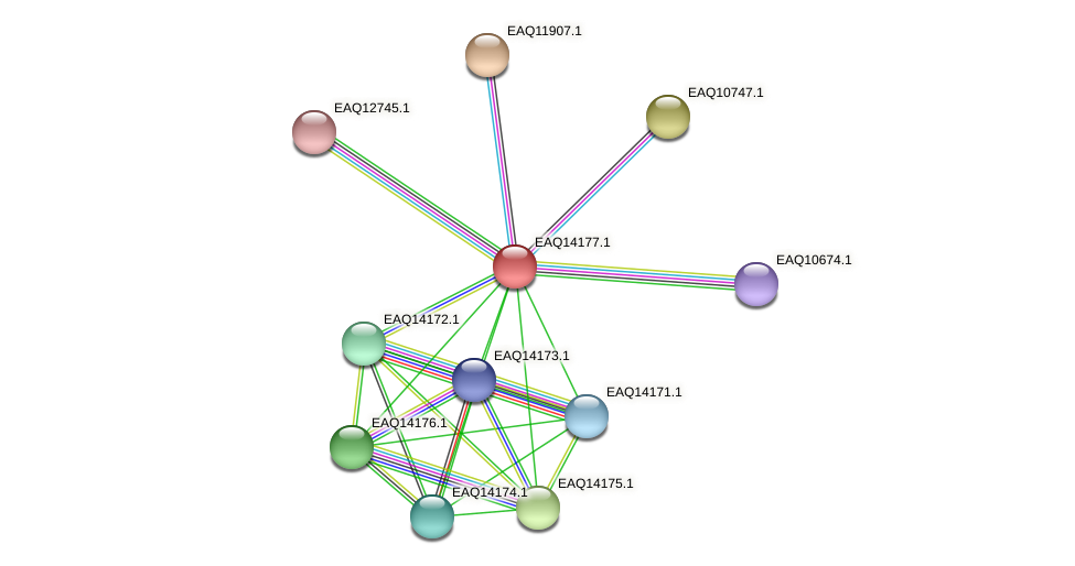 RB2654_15946 protein (Maritimibacter alkaliphilus) - STRING interaction network