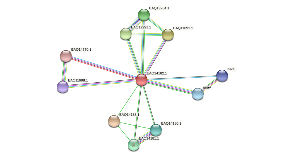 RB2654_15971 protein (Maritimibacter alkaliphilus) - STRING interaction network