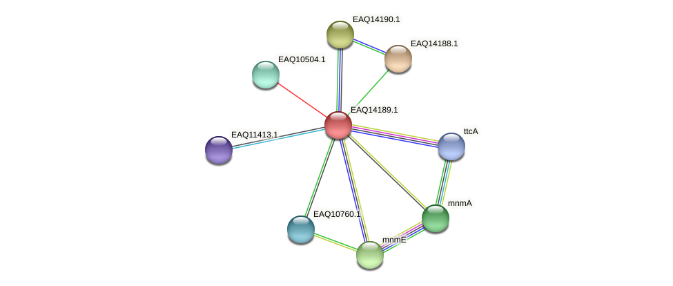 RB2654_16006 protein (Maritimibacter alkaliphilus) - STRING interaction network