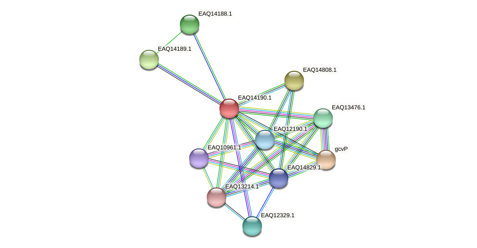 RB2654_16011 protein (Maritimibacter alkaliphilus) - STRING interaction network