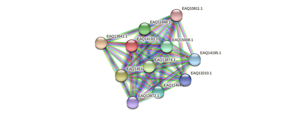 RB2654_16026 protein (Maritimibacter alkaliphilus) - STRING interaction network