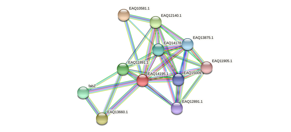 RB2654_16036 protein (Maritimibacter alkaliphilus) - STRING interaction network