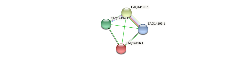RB2654_16041 protein (Maritimibacter alkaliphilus) - STRING interaction network