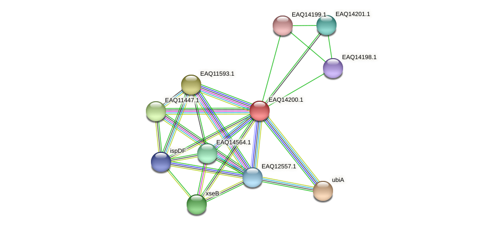 RB2654_16061 protein (Maritimibacter alkaliphilus) - STRING interaction network