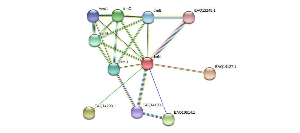 rlmN protein (Maritimibacter alkaliphilus) - STRING interaction network