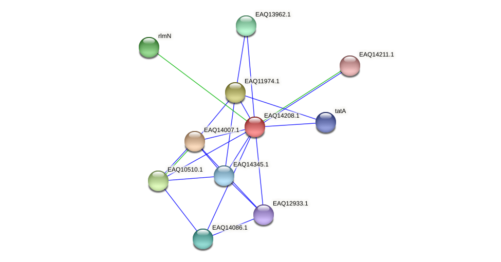 RB2654_16101 protein (Maritimibacter alkaliphilus) - STRING interaction network