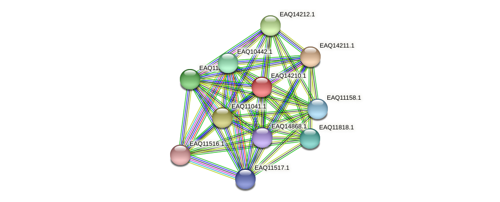 RB2654_16111 protein (Maritimibacter alkaliphilus) - STRING interaction network