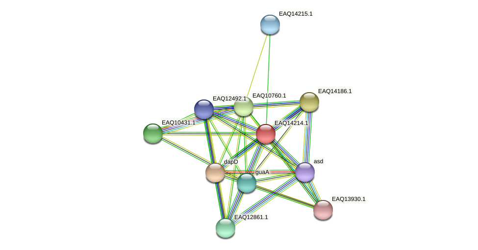 RB2654_16131 protein (Maritimibacter alkaliphilus) - STRING interaction network