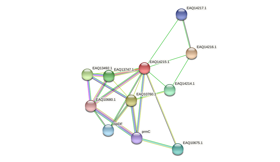 RB2654_16136 protein (Maritimibacter alkaliphilus) - STRING interaction network