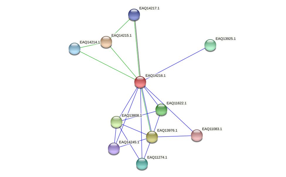 RB2654_16141 protein (Maritimibacter alkaliphilus) - STRING interaction network