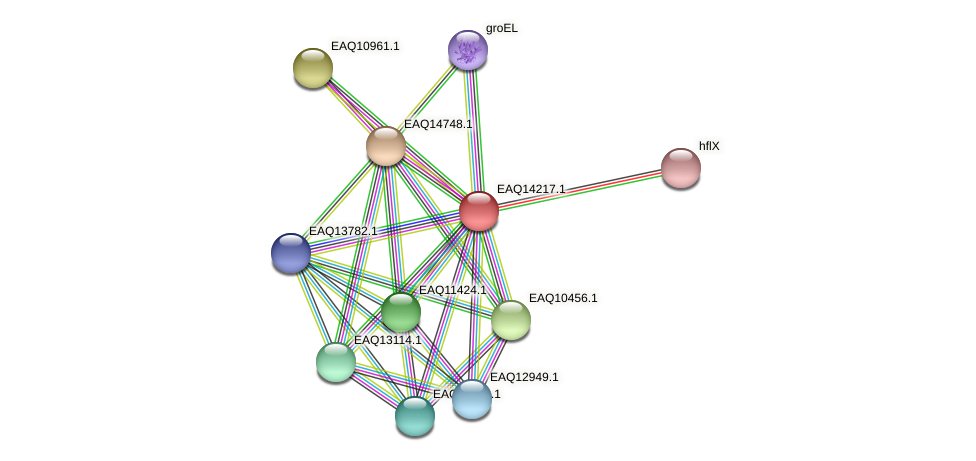 RB2654_16146 protein (Maritimibacter alkaliphilus) - STRING interaction network