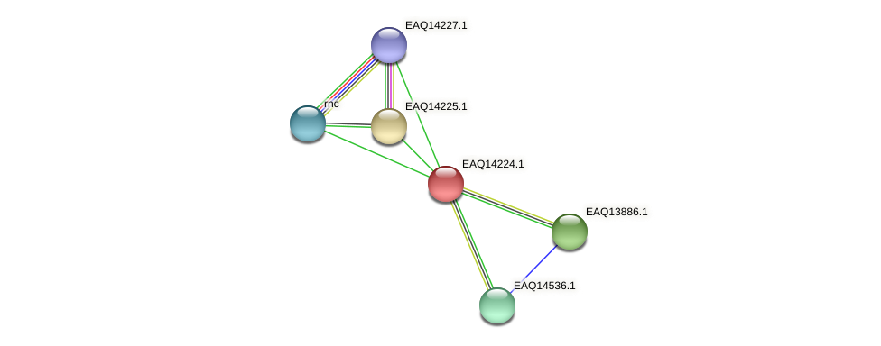 RB2654_16181 protein (Maritimibacter alkaliphilus) - STRING interaction network