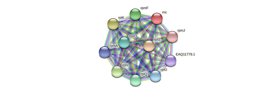 rnc protein (Maritimibacter alkaliphilus) - STRING interaction network