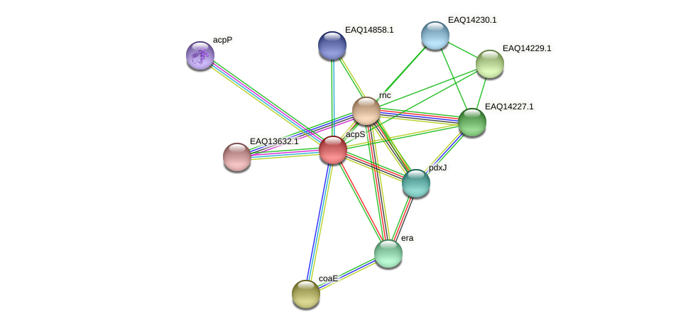 acpS protein (Maritimibacter alkaliphilus) - STRING interaction network