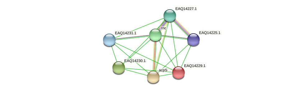 RB2654_16206 protein (Maritimibacter alkaliphilus) - STRING interaction network