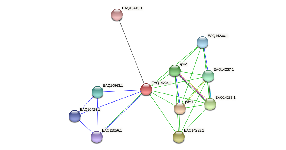 RB2654_16231 protein (Maritimibacter alkaliphilus) - STRING interaction network
