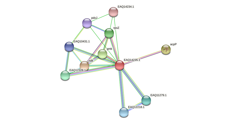 RB2654_16236 protein (Maritimibacter alkaliphilus) - STRING interaction network