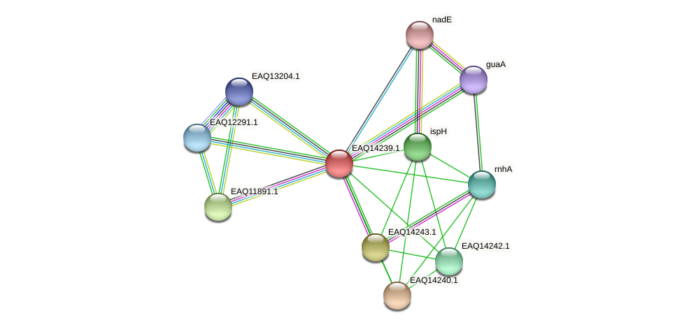 RB2654_16256 protein (Maritimibacter alkaliphilus) - STRING interaction network