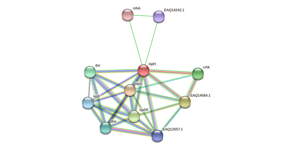 ispH protein (Maritimibacter alkaliphilus) - STRING interaction network