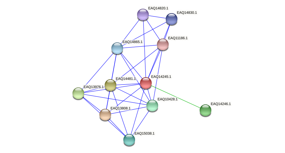 RB2654_16286 protein (Maritimibacter alkaliphilus) - STRING interaction network