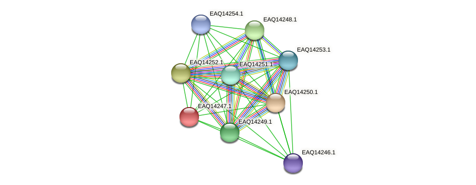 RB2654_16296 protein (Maritimibacter alkaliphilus) - STRING interaction network