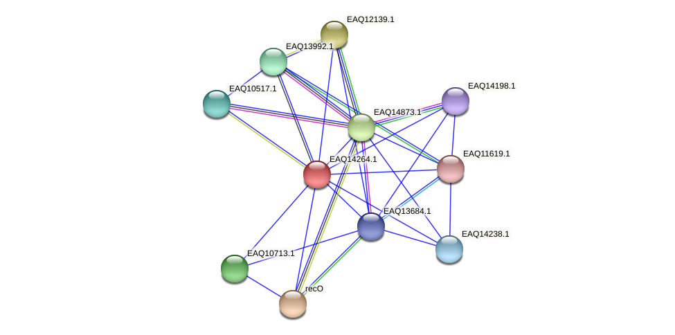 RB2654_16381 protein (Maritimibacter alkaliphilus) - STRING interaction network