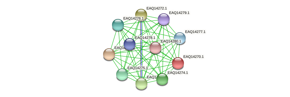 RB2654_16411 protein (Maritimibacter alkaliphilus) - STRING interaction network
