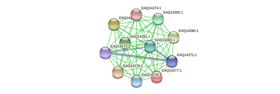 RB2654_16446 protein (Maritimibacter alkaliphilus) - STRING interaction network