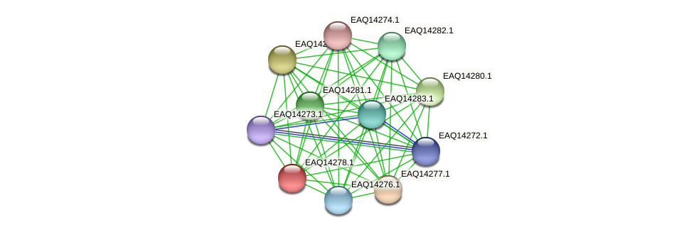 RB2654_16451 protein (Maritimibacter alkaliphilus) - STRING interaction network