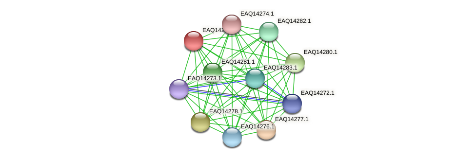 RB2654_16456 protein (Maritimibacter alkaliphilus) - STRING interaction network