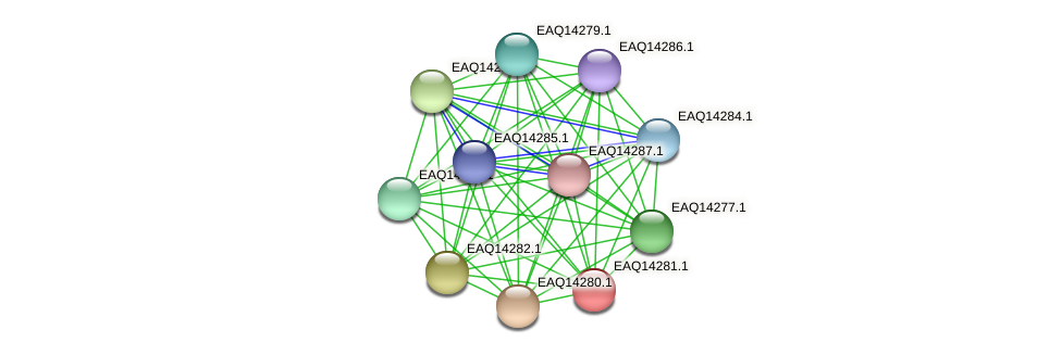 RB2654_16466 protein (Maritimibacter alkaliphilus) - STRING interaction network