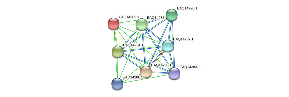 RB2654_16506 protein (Maritimibacter alkaliphilus) - STRING interaction network
