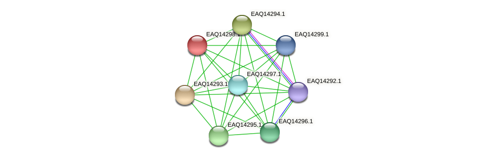 RB2654_16551 protein (Maritimibacter alkaliphilus) - STRING interaction network